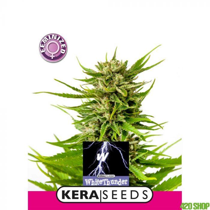 White Thunder Kera Seeds