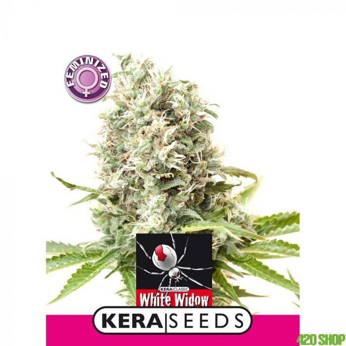 White Widow Kera Seeds