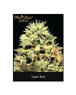 Super Bud Green House