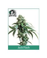 Jack Flash Sensi Seeds (Indoor / Regular)