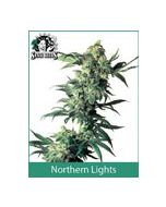 Northern Lights Sensi Seeds (Indoor / Regular)