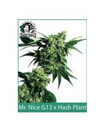 G13 X Hash Plant | Sensi Seeds (Indoor / Regular)