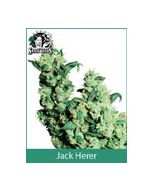 Jack Herer Sensi Seeds (Indoor / Regular)