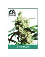 Silver Haze (Indoor Regular) Sensi Seeds