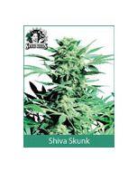 Shiva Skunk Sensi Seeds (Indoor / Regular)