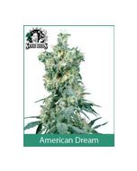 American Dream Sensi Seeds (Indoor / Regular)