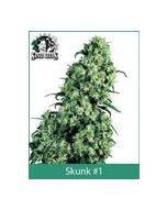 Skunk #1 Sensi Seeds (Indoor / Regular)