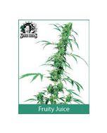Fruity Juice Sensi Seeds (Indoor / Regular)