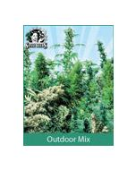 Sensi Seeds Outdoor Mix (Regular)