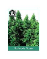 Ruderalis Skunk Sensi Seeds (Outdoor / Regular)