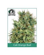 Cali Orange Bud Sensi Seeds (Regular)