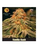 Vanilla Kush Barneys Farm