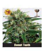 Sweet Tooth Barneys Farm