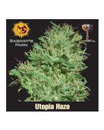 Utopia Haze Barneys Farm