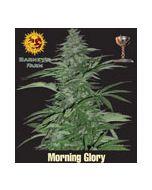 Morning Glory (Feminised) Barneys Farm
