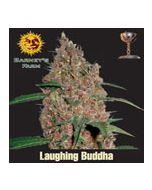 Laughing Buddha Barneys Farm