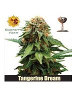 Tangerine Dreams Barneys Farm