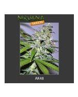 AK48 Nirvana