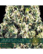 Amnesia Haze Autoflower Zaden