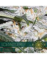 Low Ryder Autoflower Vision Seeds