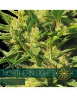 Northern Lights Autoflower Vision Seeds