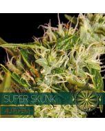 Super Skunk Autoflower Vision Seeds