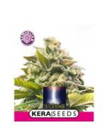 Dutch Power Kera Seeds
