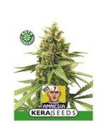 Amnesia Auto Kera Seeds