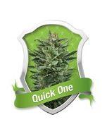 Quick One Autoflower