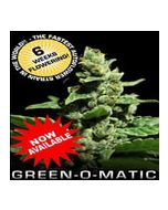 Green-o-Matic Autoflowering Green House