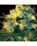 Jack Herer Vision Seeds
