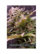 Caramello Auto Vision Seeds