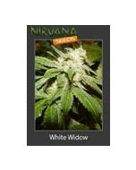 White Widow Nirvana