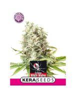 White Widow Kera Seeds