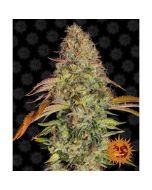 Zkittlez OG Auto Cannabis Seeds