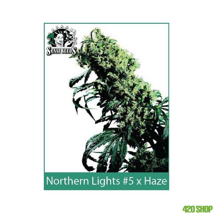 Northern Lights #5 x Haze Sensi Seeds (Indoor / Regular)