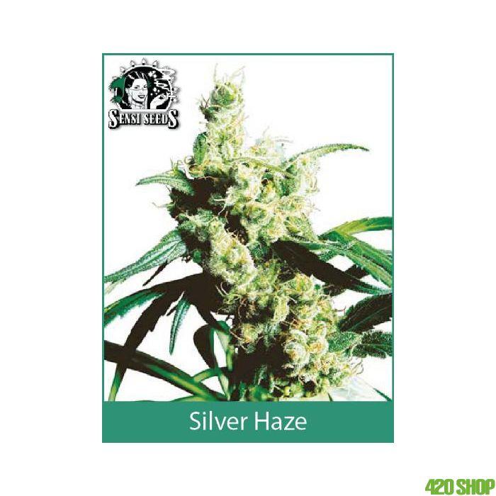 Silver Haze (Indoor Regular) Sensi Seeds