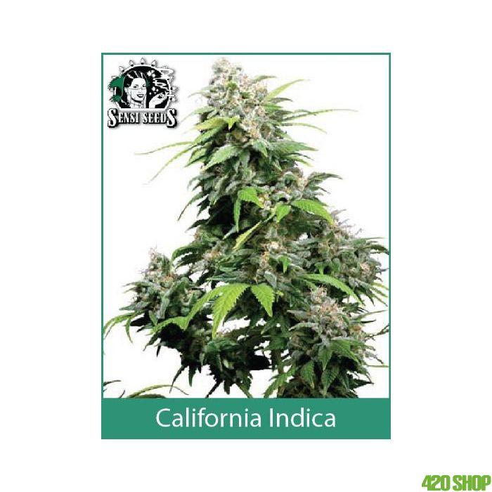 California Indica Sensi Seeds (Indoor / Regular)