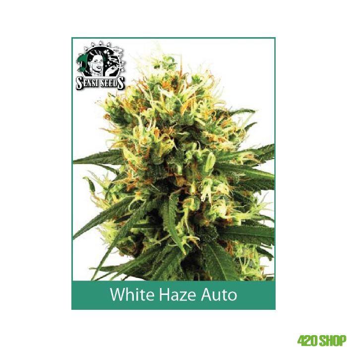 White Haze Automatic Sensi WL