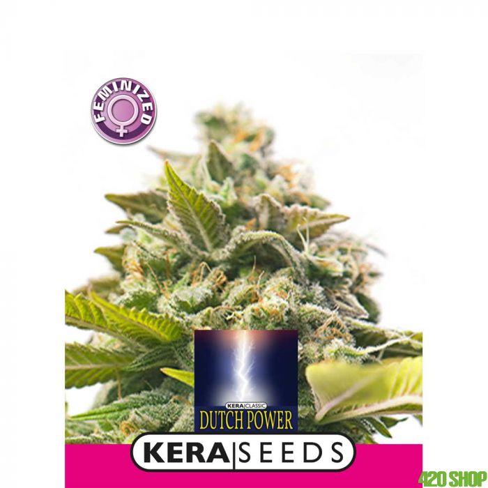 Dutch Power Kera Seeds