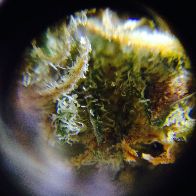 Cannabis onder iPhone microscoop