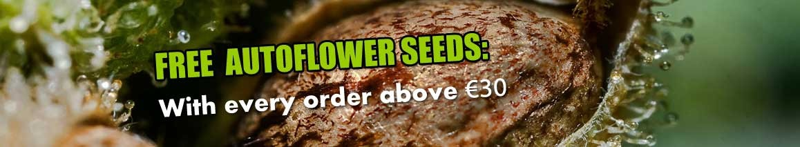 Free Cannabis Autoflower Seed